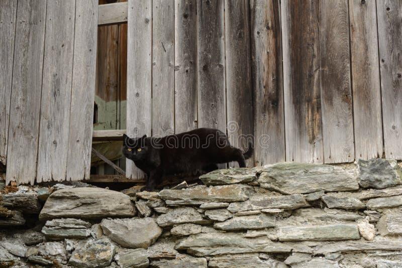 Gato negro - leñera vieja fotografía de archivo