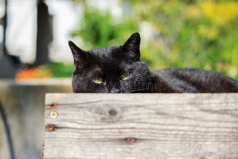 Gato negro nacional en puesta del sol foto de archivo