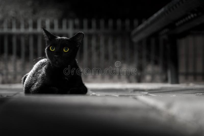 Gato negro por noche imagen de archivo
