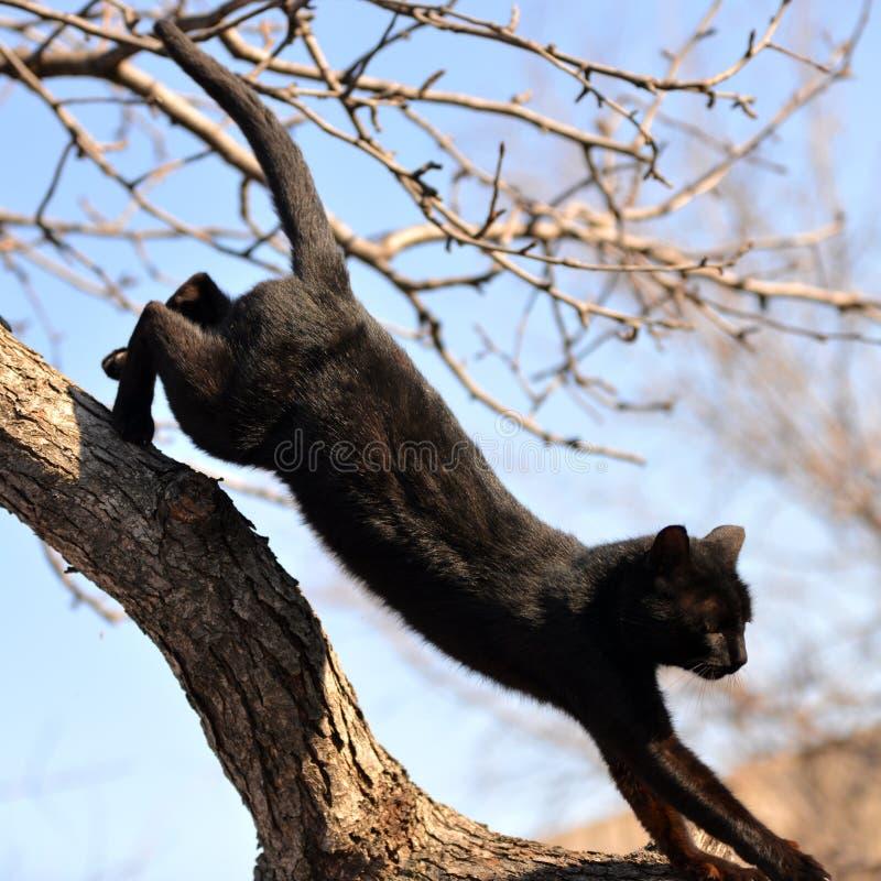 Gato negro que camina abajo de imagen de archivo libre de regalías