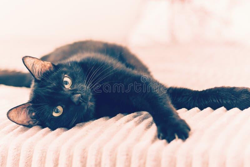 Gato negro que miente en la cubierta gris de la piel en cama imagen de archivo libre de regalías