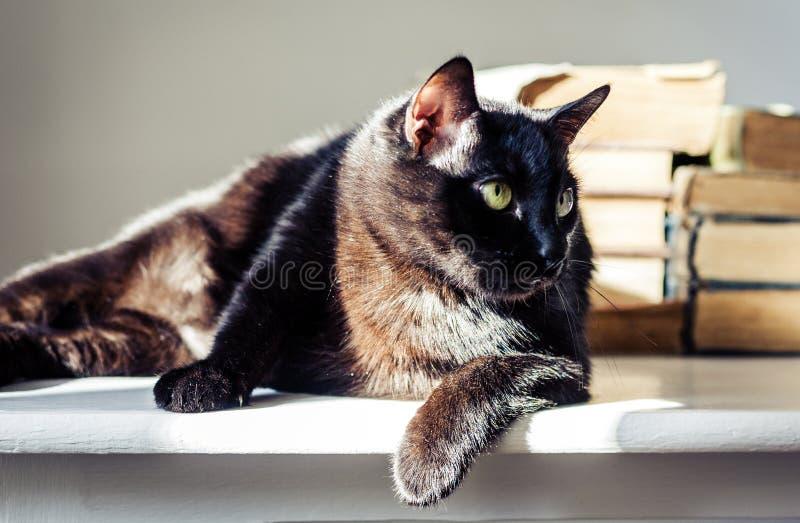 Gato negro que miente en la tabla blanca, pila de libros viejos en fondo imagen de archivo libre de regalías