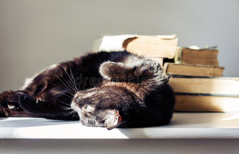 Gato negro que miente en la tabla blanca, pila de libros viejos en fondo fotografía de archivo