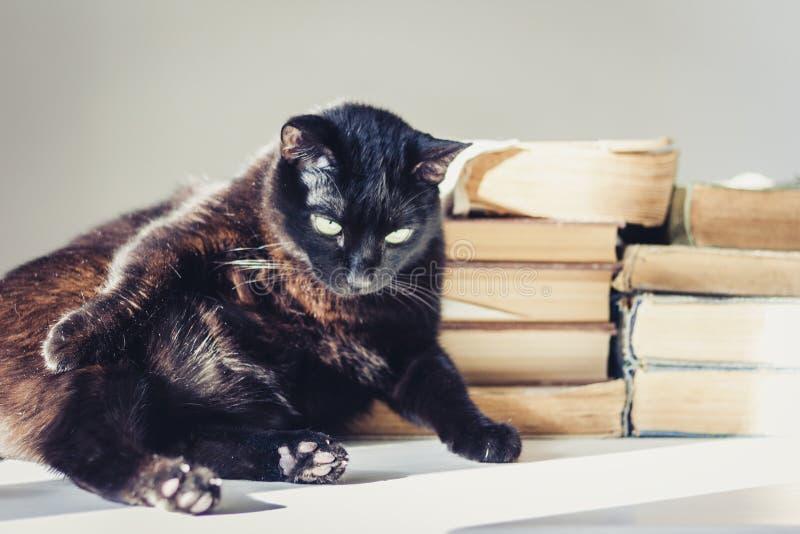 Gato negro que miente en la tabla blanca, pila de libros viejos en fondo foto de archivo