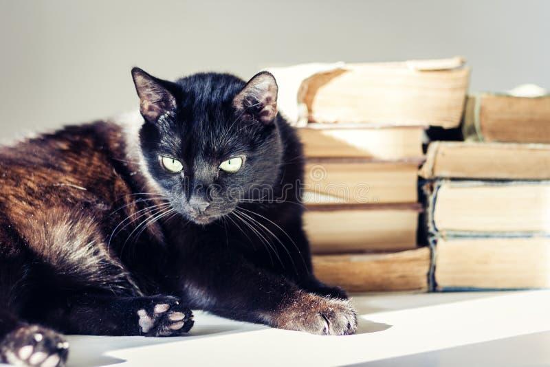 Gato negro que miente en la tabla blanca, pila de libros viejos en fondo imagen de archivo