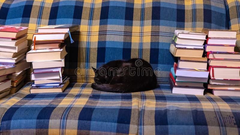 Gato negro que miente en un sofá a cuadros entre las pilas de libros foto de archivo