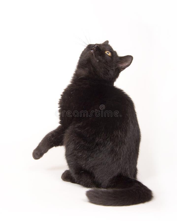 Gato negro que mira derecho para arriba fotografía de archivo libre de regalías