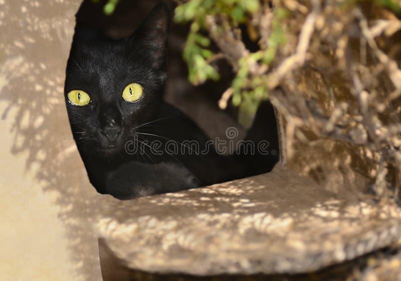 Gato negro que mira a escondidas hacia fuera de una caja fotografía de archivo