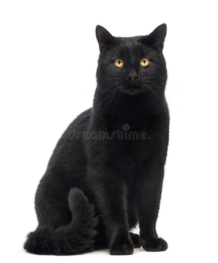 Gato negro que sienta y que mira la cámara fotografía de archivo libre de regalías
