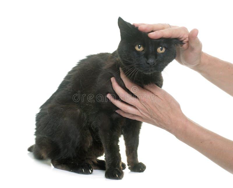 Gato negro viejo de caricia fotos de archivo libres de regalías