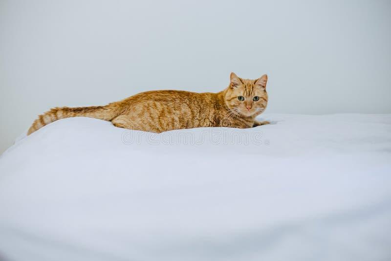 gato no assento da cama fotografia de stock royalty free