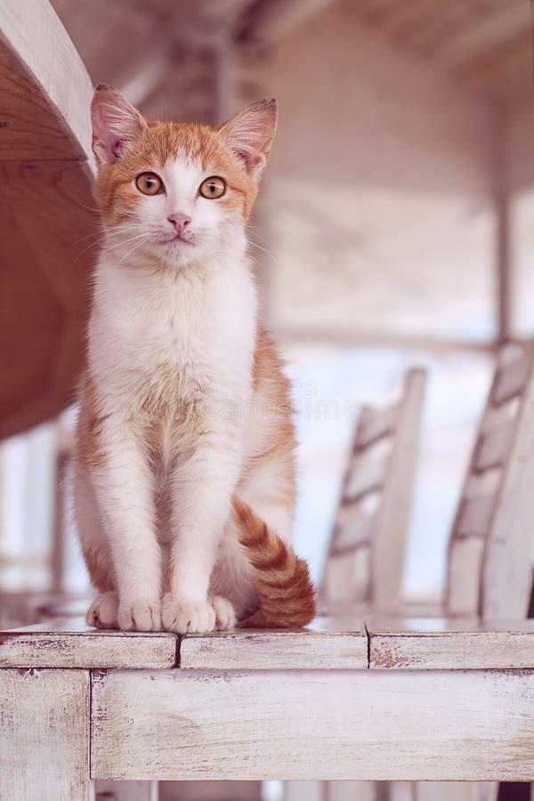 Gato no interior branco imagens de stock