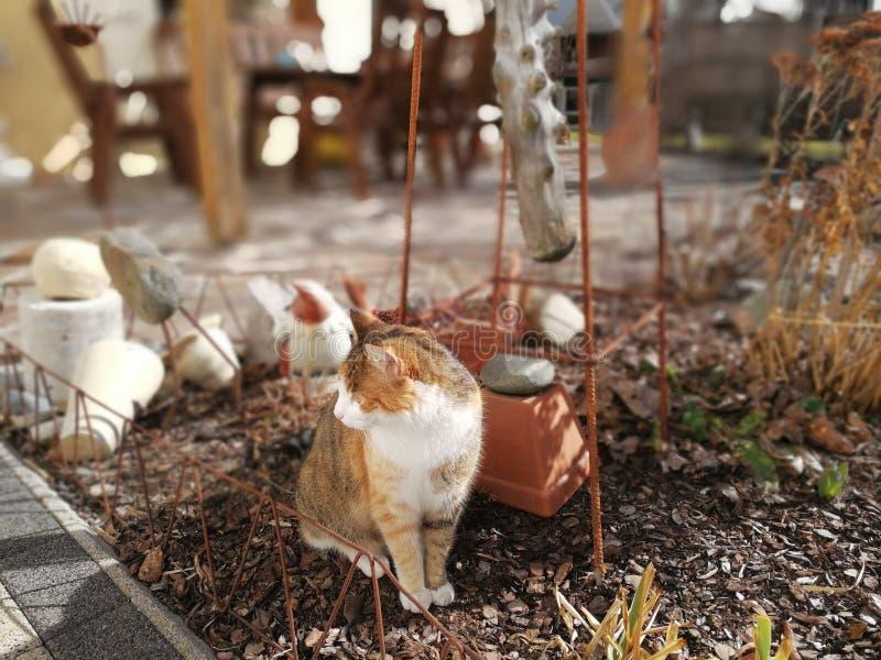 Gato no jardim imagens de stock royalty free