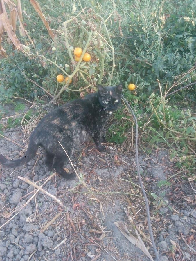 Gato no jardim do outono fotografia de stock royalty free