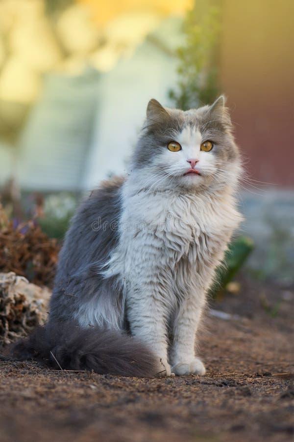 Gato no jardim que lambe sua cara Gato novo na grama fotos de stock royalty free