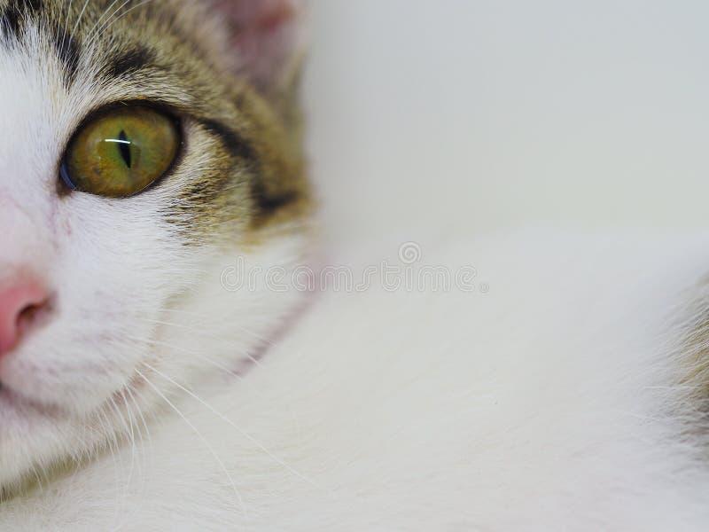 Gato no macro fotografia de stock
