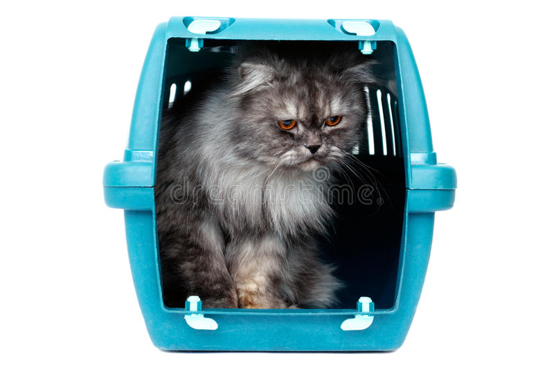 Gato no portador da gaiola imagem de stock