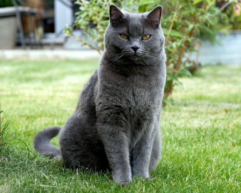 Gato no prado foto de stock royalty free