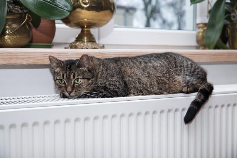 Gato no radiador, morno, gato de gato malhado que encontra-se um radiador morno imagem de stock