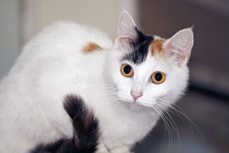 Gato no refrigerador. fotografia de stock royalty free