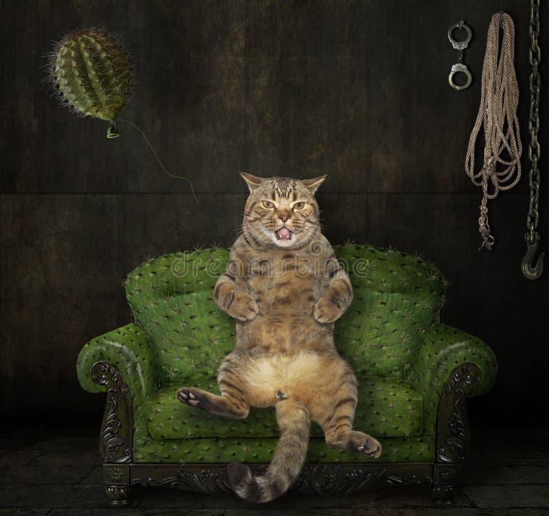Gato no sofá espinhoso ilustração do vetor