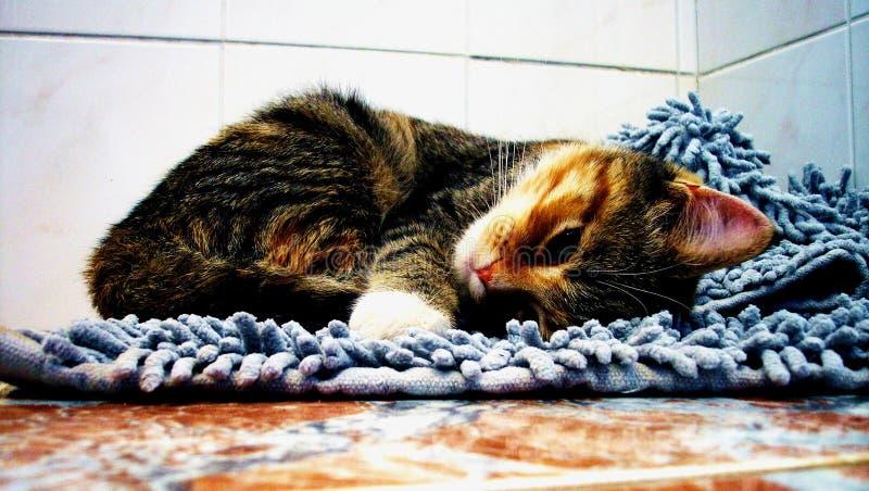 Gato no tapete macio foto de stock