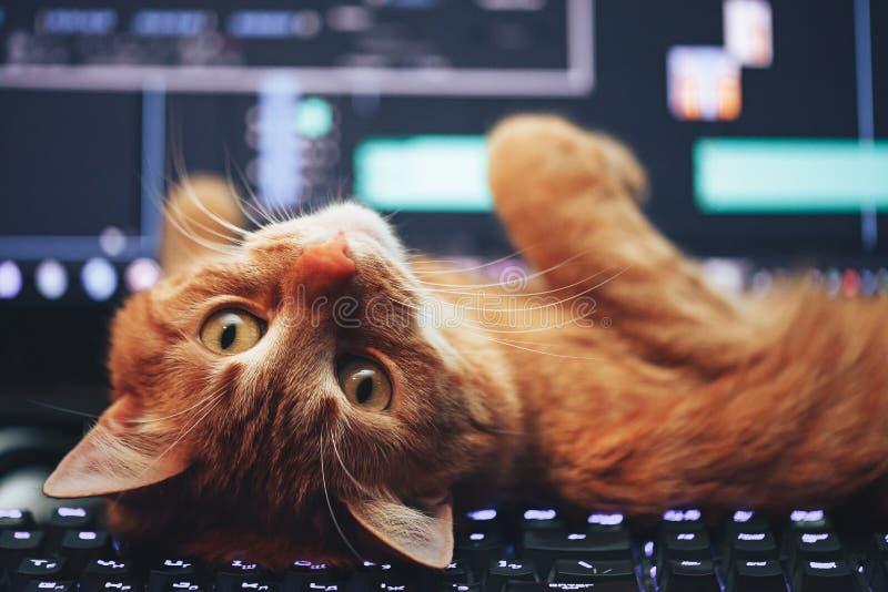 Gato no teclado de computador fotografia de stock