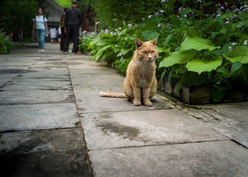 Gato no templo de Fayuan, Pequim China foto de stock