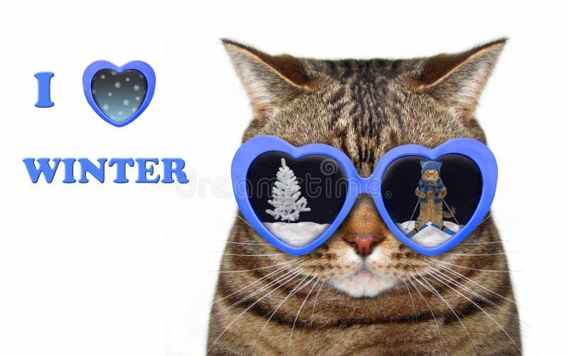 Gato nos óculos de sol com uma reflexão 2 do inverno fotos de stock royalty free