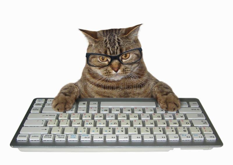 Gato nos vidros com um teclado branco fotos de stock