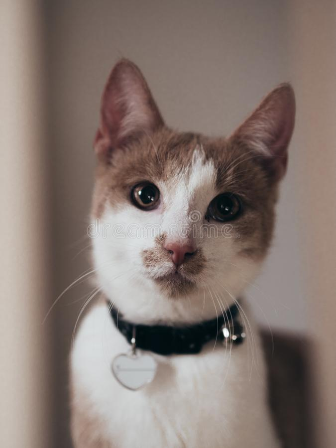 Gato novo que olha na lente fotos de stock