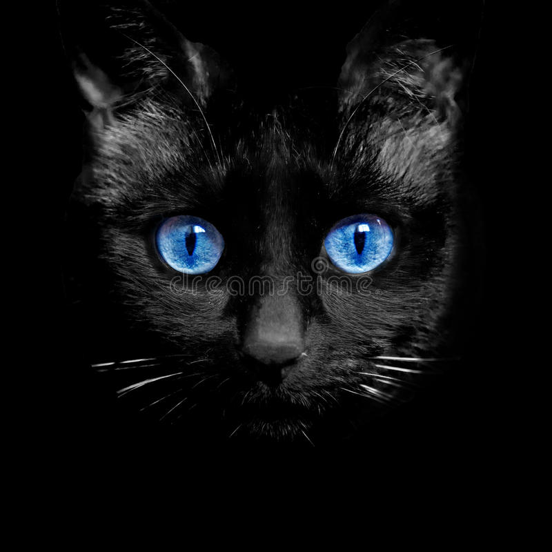 Gato observado fotografía de archivo