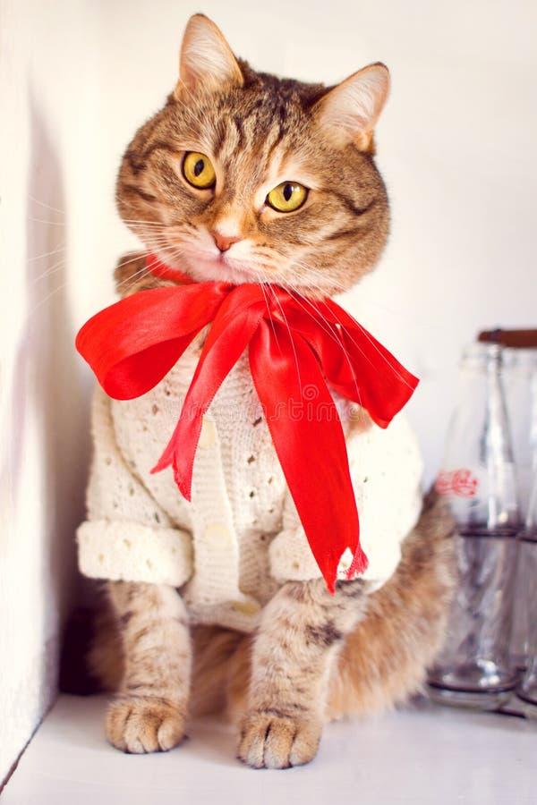 Gato observado de oro con el arco rojo imagen de archivo libre de regalías
