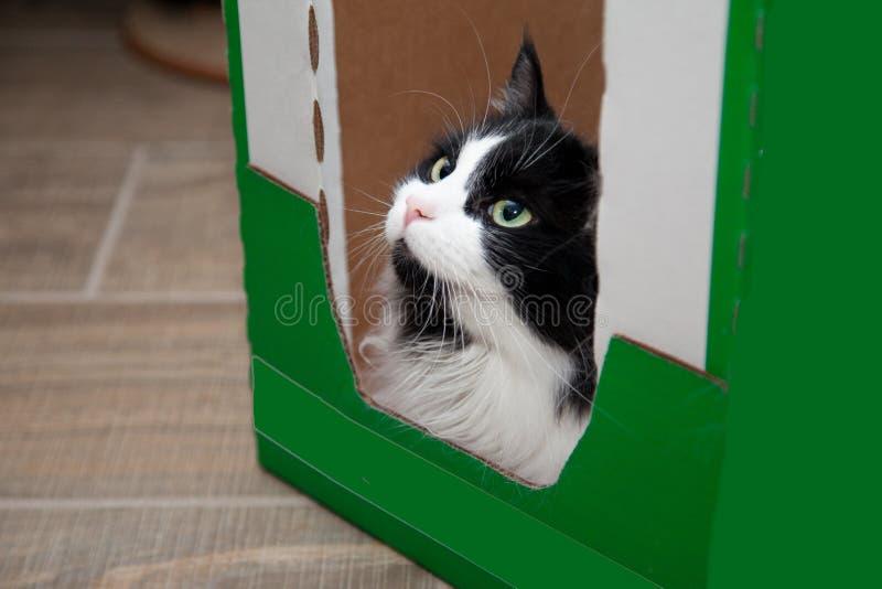 Gato obstinado en caja imagen de archivo libre de regalías