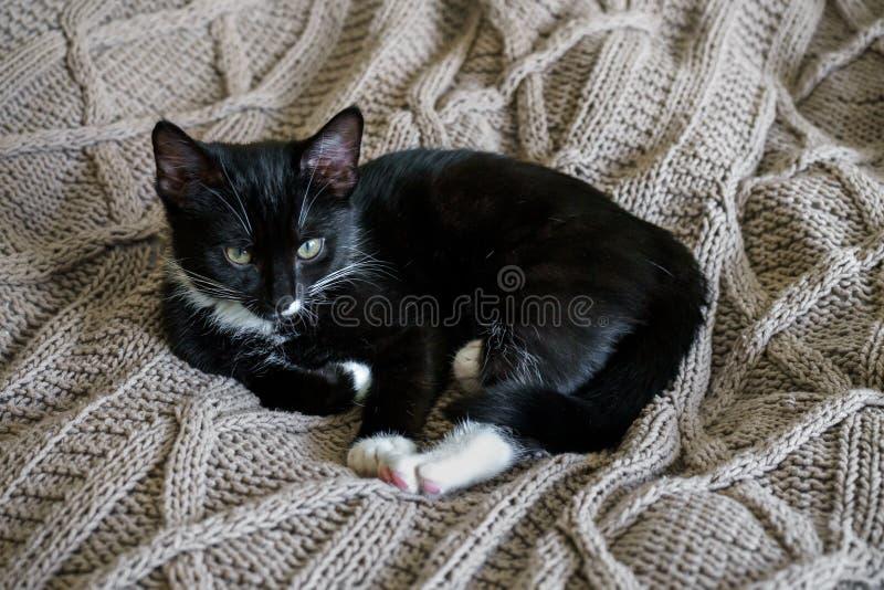 Gato so?oliento blanco y negro que descansa sobre un tiro de la cama imágenes de archivo libres de regalías