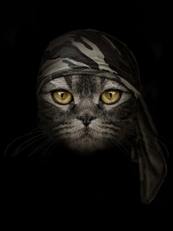 Gato oscuro del bozal en venda marrón del camuflaje foto de archivo libre de regalías