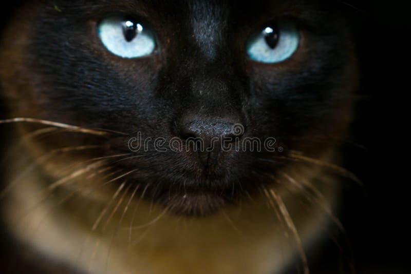 Gato oscuro en un agujero con los ojos claros foto de archivo