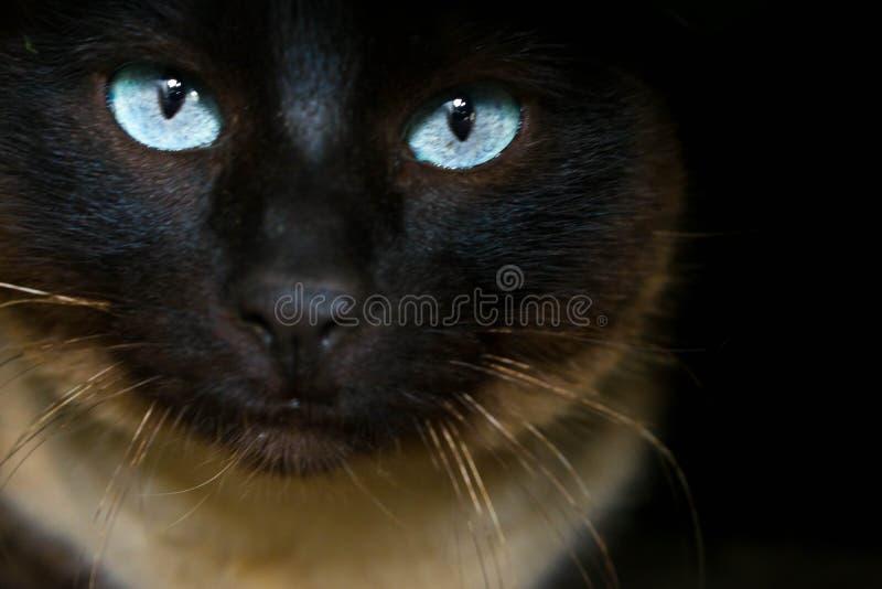 Gato oscuro en un agujero con los ojos claros imagenes de archivo