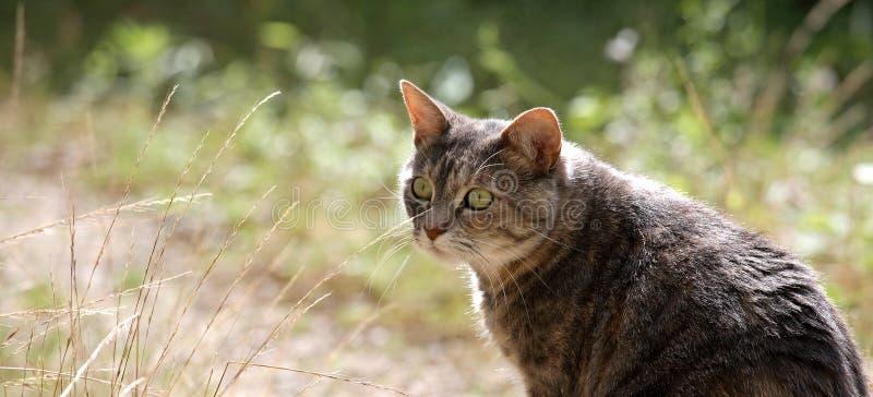 Gato panorámico del jardín fotografía de archivo