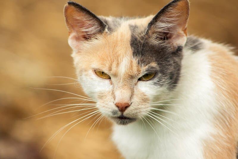Gato peligroso con una mala cara fotos de archivo
