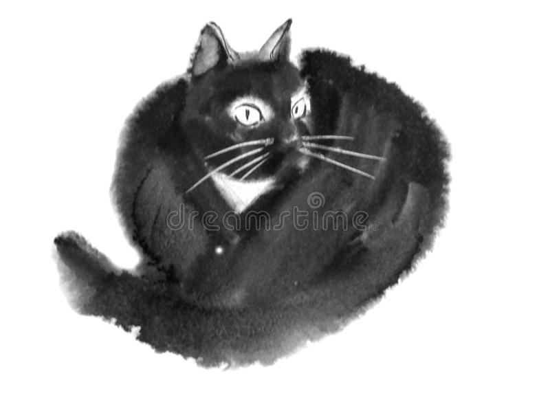 Gato peludo preto e branco imagem de stock royalty free
