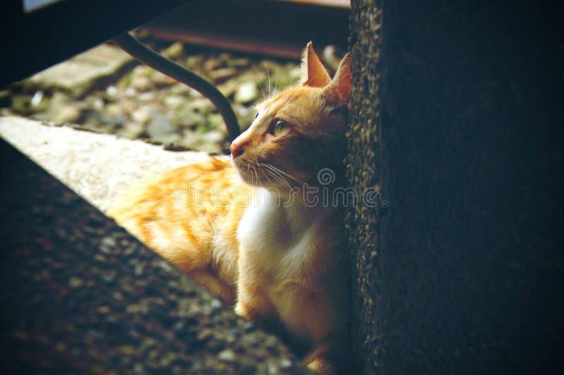 Gato pensativo fotos de archivo