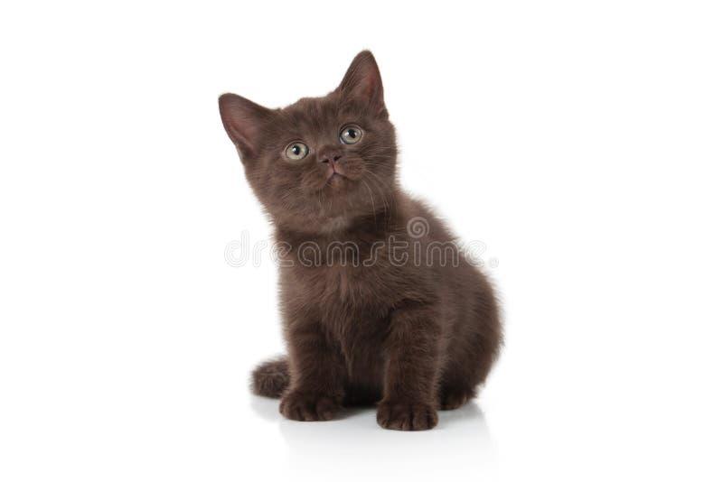 Gato Pequeño gatito británico en el fondo blanco imágenes de archivo libres de regalías