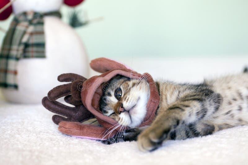 Download Gato pequeno foto de stock. Imagem de interior, furry - 26512582