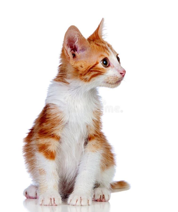 Gato pequeno adorável fotografia de stock