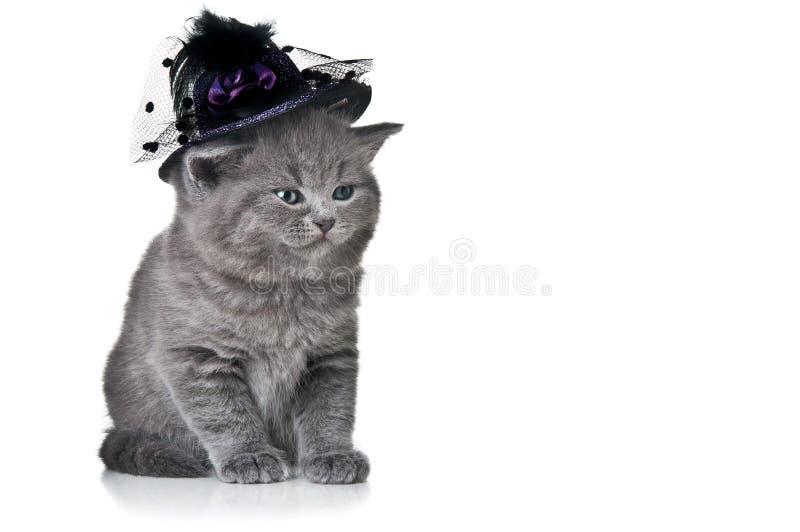 Gato pequeno com chapéu foto de stock