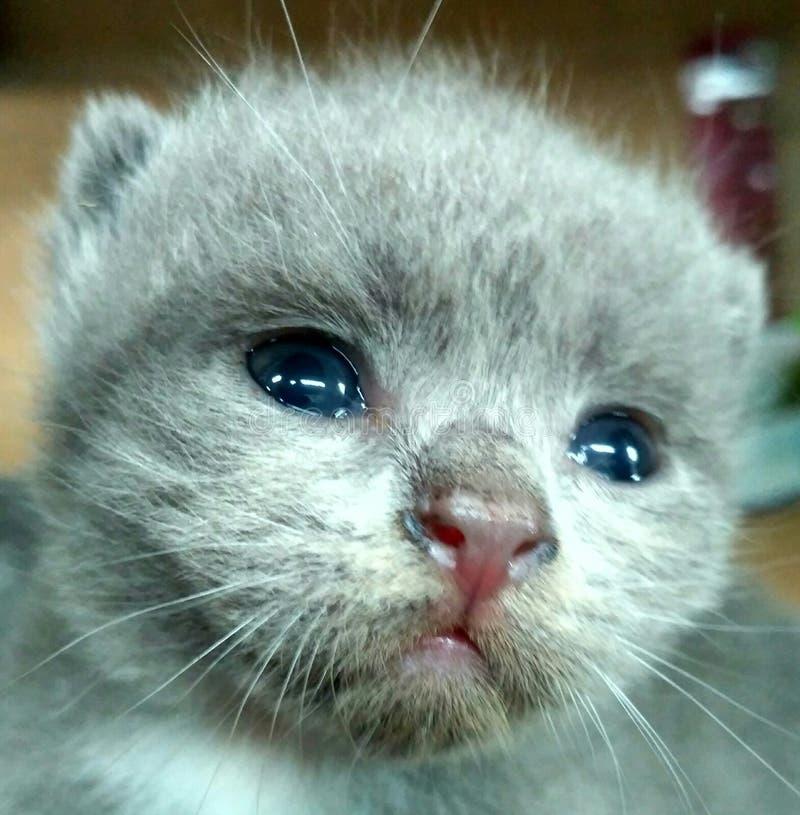 Gato pequeno do bebê foto de stock royalty free