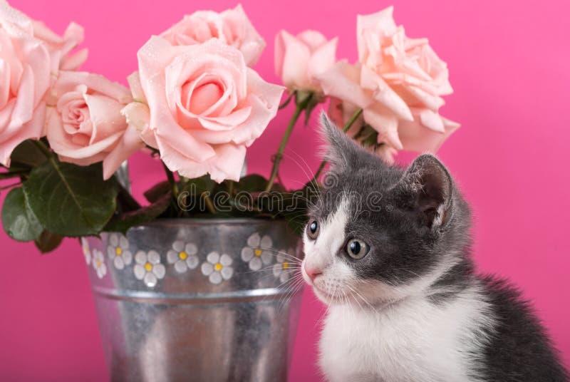 Gato pequeno do bichano que levanta na frente do ramalhete das rosas em um potenciômetro de flor fotografia de stock royalty free