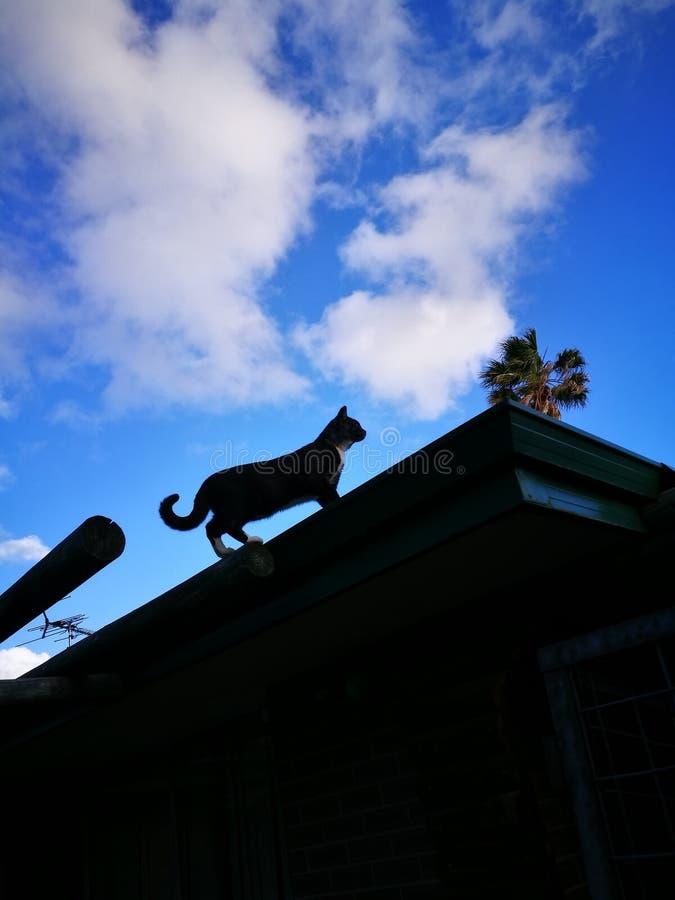 Gato pequeno no telhado foto de stock