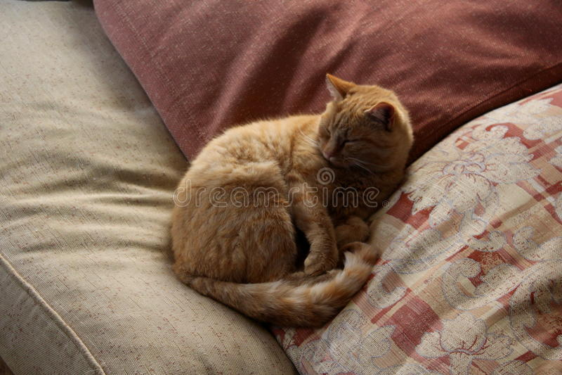 Gato pequeno vermelho em um descanso fotografia de stock royalty free